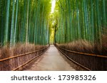 Bamboo Forest In Japan ...