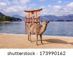 a deer with big torii gate at... | Shutterstock . vector #173990162