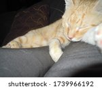 Morpheus Dream For A Cat