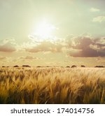 Stock photo wheat field 174014756