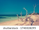 Dried Driftwood On The Beach I...