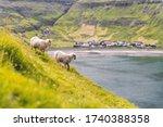Two Sheeps Near Tjornuvik...