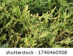 natural green bushes background.... | Shutterstock . vector #1740460508