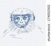 hand drawn gray langur portrait ... | Shutterstock .eps vector #174052502