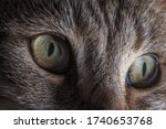 Domesticated Animals Theme. House Cat Eyes Detailed Close Up Macro Photo. The Cat Felis Catus is a Domestic Species of Small Carnivorous Mammal. - stock photo