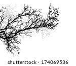Tree Branch. Vector