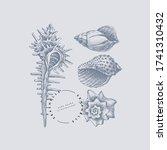 set of hand drawn shells vector ... | Shutterstock .eps vector #1741310432