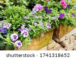 Colorful Flowers For Balcony Or ...