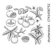 vector sketch citrus fruit...   Shutterstock .eps vector #1741458752