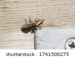 A Fence Post Jumping Spider ...