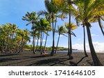 Palm Trees Alongside The Punalu'...