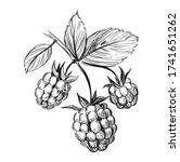 raspberry sketch. black vector... | Shutterstock .eps vector #1741651262