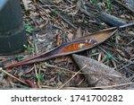 Twig Of Tucuma Palm ...