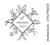 hand drawn micro greens botany... | Shutterstock .eps vector #1741796015