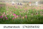 Krachiew Flower Field Is A...