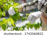 Gardening time. Close-up of male hands in protective gloves trimming tree outside - stock photo