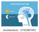 the circadian rhythm and sleep... | Shutterstock .eps vector #1742387492