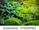 Beautiful Bright Green Moss And ...