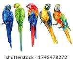Set Of  Tropical Birds  Multi...