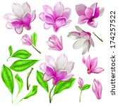 flower  bud  nature  graphics ... | Shutterstock . vector #174257522