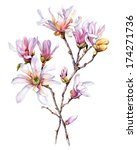 watercolor with magnolia flower | Shutterstock . vector #174271736
