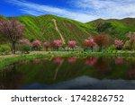 Nishiki Autumn Lake In Spring ...