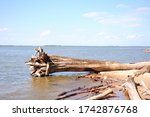 A Dumped Tree Trunk Lies On Th...