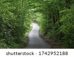 A Winding Forest Road In Tunnel ...