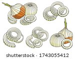 Colored Onions Vector...