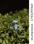 Fake Frog At The Garden.