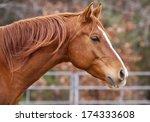 Stock photo arabian horse 174333608