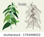 Nettle Green And Dried Acute...