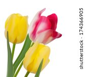 Tulip Composition On White...