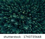 Aerial Overhead View Of Tree...