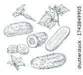 hand drawn cucumber. set...   Shutterstock .eps vector #1743849905