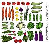 vector hand drawn set of spring ... | Shutterstock .eps vector #1744003748