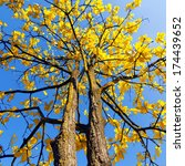 Tree With Yellow Leaves  The...
