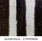 pattern of zebra skin. | Shutterstock . vector #174443606
