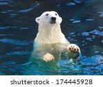 Nice Photo Of Cute White Polar...