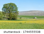 Meadows With Sycamore Tree And...