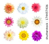Stock photo selection of various flowers isolated on white background colorful of flowers 174457436