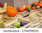 Different Sorts Of Pumpkins ...