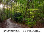 Forest trail in deep woods. Trail in deep forest. Forest trail view