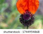 Stamens Of A Flower Closeup....