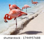 Sand  Sea And Flamingos In...
