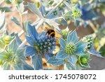 Bumblebee Pollinates An...