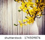 Blooming Forsythia Spring...