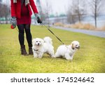 Stock photo winter outdoor portrait of pregnant woman in fashionable clothes walking two dogs 174524642
