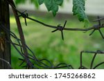 Old Rusty Barbed Wire Close Up...