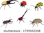 Different Kinds Of Beetles...